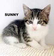 Sunny sucht ein Zuhause