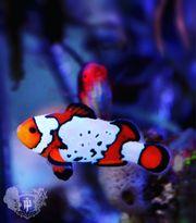 SUCHE Meerwasserbewohner Fische Korallen Niederetiere