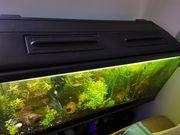 240 l Aquarium abzugeben