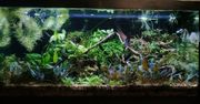 Aquarium komplett Wasserpflanzen