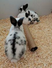 Kaninchen ab 27 1 20