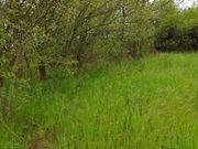 SUCHE Stückle Garten Baumstück Freizeitgrundstück