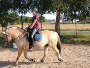 Schulpferd familien pferd zu verkaufen