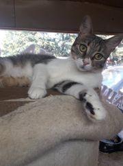 Kleines Katzenmädchen Azumi sucht sein
