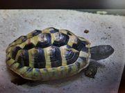 Landschildkröte in Glonn entlaufen