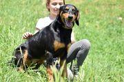 Mate 8 Monate - Dobermann-Mix - Tierhilfe