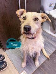 Yogi sucht liebevolle Menschen