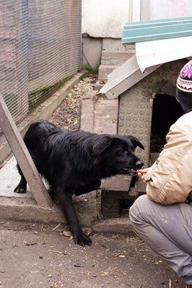 Hunde - Limba - Braucht Zeit und Vertrauen