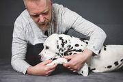 Hundephysiotherapeut Ausbildung