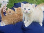 2 Katzenbabys abzugeben 2 reserviert