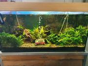 Aquarium mit kompletten Zubehöf und
