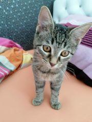 RESERVIERT Babykatze 3 Monate