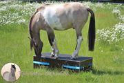Pferdepodest Podest für Bodenarbeit Zirkuspodest