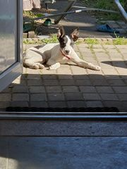 Bella such ein neues Zuhause
