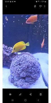 Meerwasser Aquarium Inhalt Fische Korallen