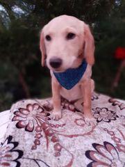 Maschka - kleines Hundemädchen sucht das
