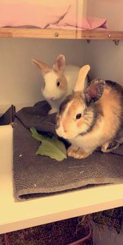 Liebevolle Kaninchen abzugeben