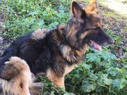 Mora4 ältere Hundedame sucht ihr