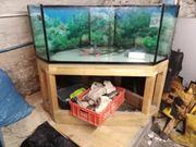 Aquarium 400l