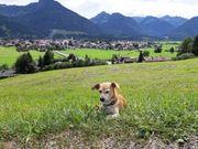 Gesucht Mietwohnung Oberstdorf oder Umgebung