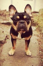 unseren Hund schweren Herzens