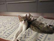 Katzen in gute Hände abzugeben