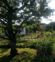 Schrebergarten Garten Freizeitgrundstück in Heidelberg
