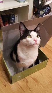 Katze Kater Rossi vermisst Finderlohn