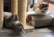 Katzen Nala und Tinka suchen