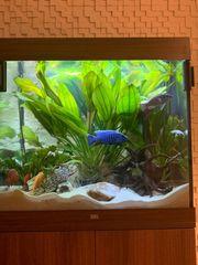 Verkaufe Aquarium 200 Liter komplett