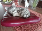 Keramik-Katze auf Liegefläche