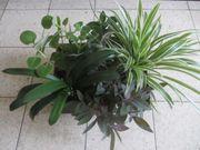 Zimmerpflanzen - Sonderangebot Eine Pflanzenkiste mit