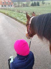 Liebes Mädchen sucht Pferdchen zum