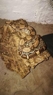 M S Reptilien 0 1
