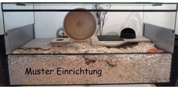 Nagerium - Nagerterra - Terrarium - Terra 100 cm x 50 cm x 50 cm (L x T x H)