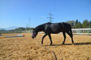 Pony sucht Möhrchengeber