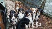 Hundepension Hundesitting Hundebetreuung glückliche Pfoten