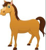 Suche liebes Pferd als Reitbeteiligung