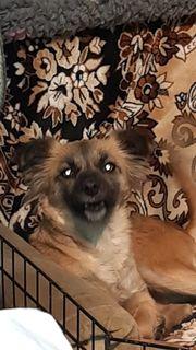 Knopka - liebevolle Hundemama sucht ihr
