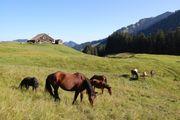Pferdeweide auf der Alp Sommer