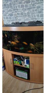 Juwel Vision 450 Aquarium in