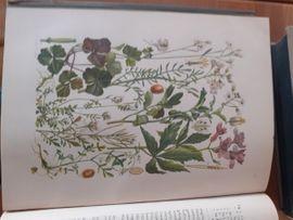 Komplette Sammlungen, Literatur - Illustrierte Flora von Mittel-Europa von