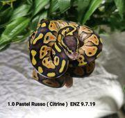 1 0 Pastel Russo Citrine