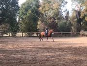Suche Reitbeteiligung an Sportpferd pony