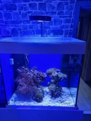Lido meerwasseraquarium