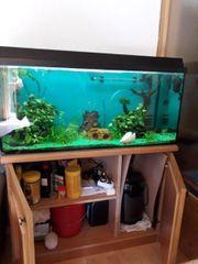 Aquarium 100x40x40 wie auf den