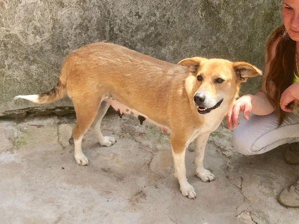 Hera- Verlasshund -kinderfreundlich - ruhig - klein