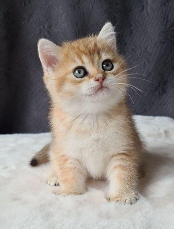 Kostenlos kaufvertrag katze Katzen Kaufvertrag
