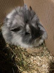 junges Kaninchen abzugeben