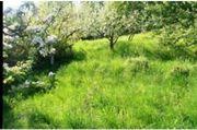 Suche Grundstück Wiese Koppel Garten